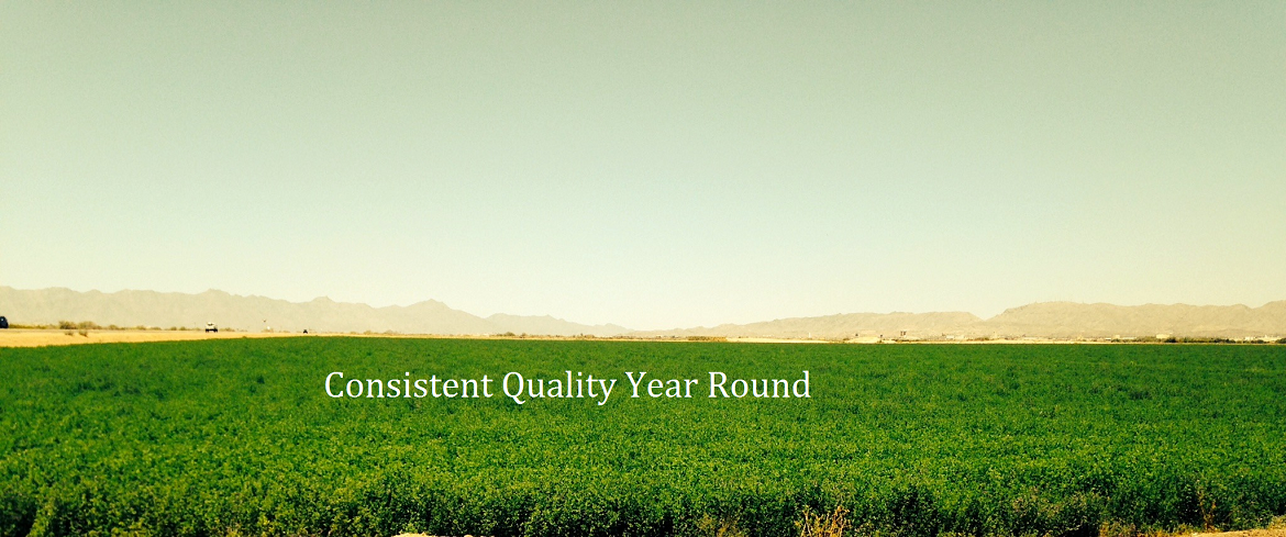 Consistent Quality Feed Year Round